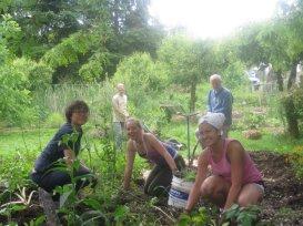 Weeding the gardens at Dharmalaya and Vistara